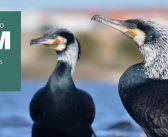 Novo Observatório de Aves no Montijo