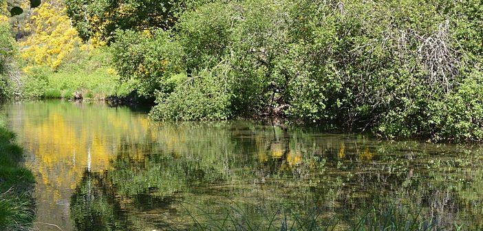 ONGAs preocupadas com os nossos rios e ribeiras