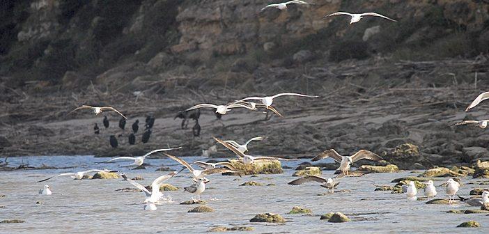 Pingo Doce e LPN combatem poluição nas praias