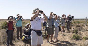 Festival de Observação de Aves & Atividades de Natureza chega aos quatro cantos do mundo