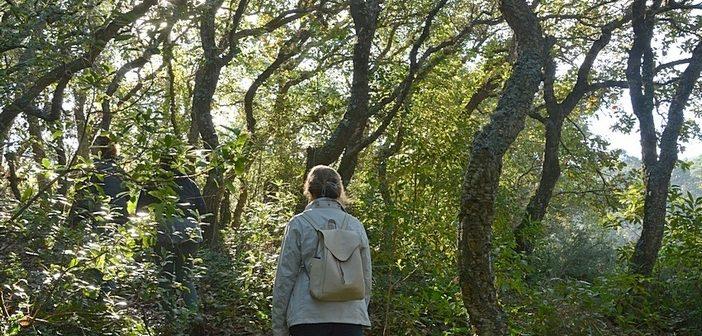 Serra de Sintra e os Bosques Mágicos