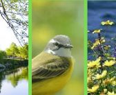Primavera: O Despertar das Aves