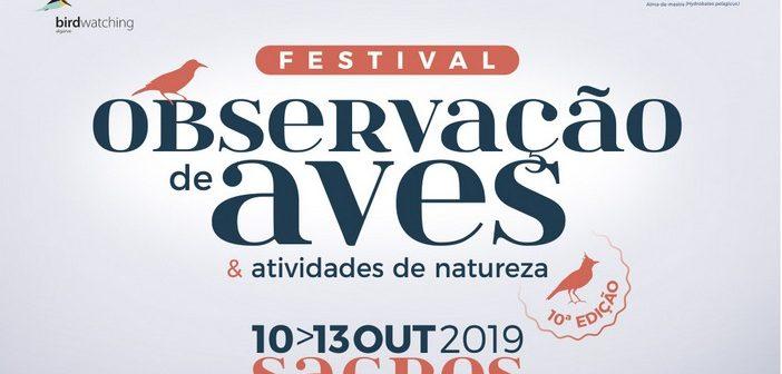 Festival de Observação de Aves de Sagres: inscrições abrem hoje