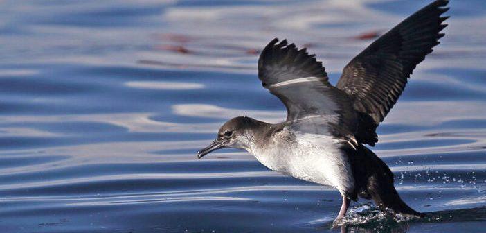 1 em cada 5 espécies de ave da Europa está ameaçada de extinção